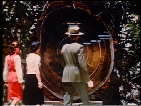 vídeos de stock, filmes e b-roll de 1950s forest ranger showing redwood tree cross-section to two women (jump cut) - sequoia sempervirens