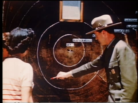 1950s ms forest ranger showing redwood tree cross-section to woman in yosemite national park - 公園保安官点の映像素材/bロール