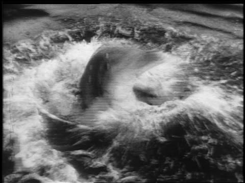 vidéos et rushes de b/w 1950s high angle dolphin with head above water spinning around with hula hoop / newsreel - audio disponible en ligne