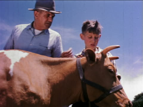 1950s low angle farmer + boy petting cow outdoors / educational - streicheln stock-videos und b-roll-filmmaterial