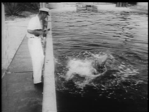 b/w 1950s man playing ukelele while dolphin with head above water spins around with plastic hoop - stunt stock videos & royalty-free footage