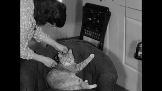 vidéos et rushes de 1950s woman puts a bow on cat - home movie - propriétaire d'animal de compagnie