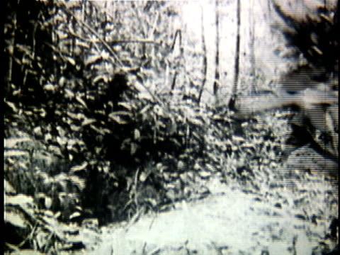 1960s b/w montage viet cong soldiers running through jungle during the vietnam war / vietnam - ベトコン点の映像素材/bロール