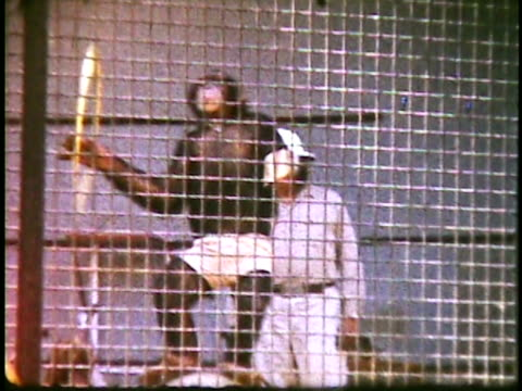 1960s ms chimp performing tricks in cage in jungle land / thousand oaks, california, usa - cage stock videos & royalty-free footage