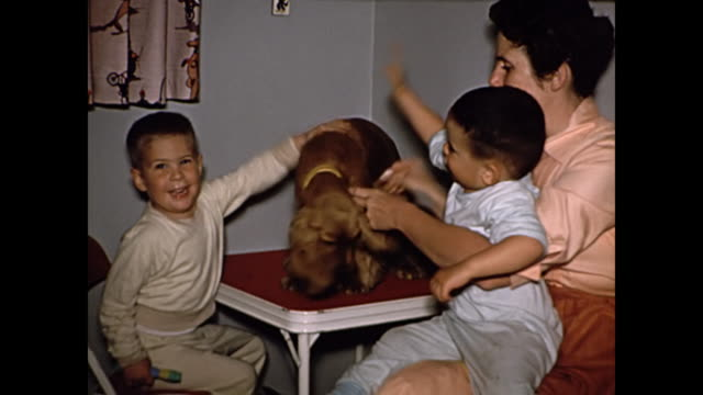 1960s cocker spaniel with woman and two boys - home movie - stroking stock videos & royalty-free footage