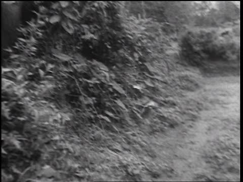 B/W 1960s dead soldier rolling out of bushes / Vietnam War / newsreel