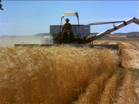 1960s farmer driving combine toward camera in golden field of wheat / documentary - agricultural equipment stock videos & royalty-free footage