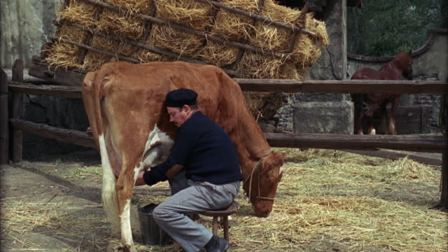 1960s WS Farmer milking cow