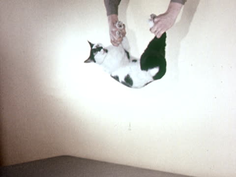 MS 1960s Hands dropping cat in empty room