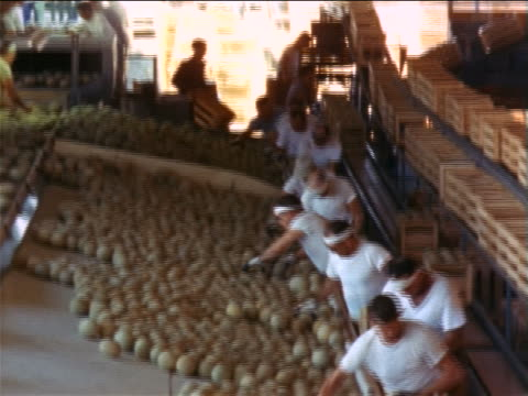 vídeos y material grabado en eventos de stock de 1960s high angle tilt down line of men grabbing melons from tray + putting them in boxes in packing plant - trabajador de línea de montaje