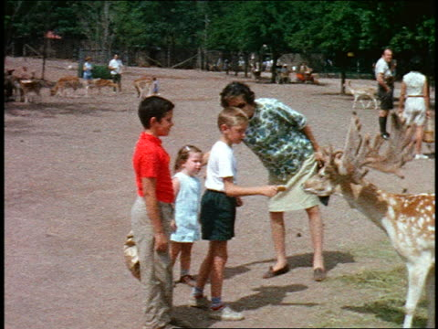 1960s HOME MOVIE three children + woman feeding spotted deer with antlers at zoo