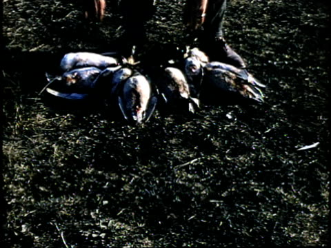 1960s ms tu hunter posing with dead ducks, lebec, california, usa - 鳥を狩る点の映像素材/bロール