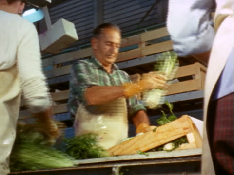 vídeos de stock, filmes e b-roll de 1960s low angle man grabbing celery from conveyor belt + putting it in crate in packing plant - aipo