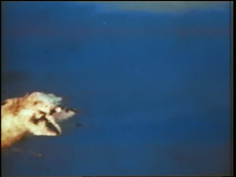 1960s missile hitting + exploding military airplane flying / cold war / documentary - military airplane stock videos & royalty-free footage
