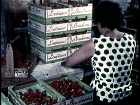 1960s montage factory worker sorting strawberries into flats / usa - nahrungsmittelfabrik stock-videos und b-roll-filmmaterial