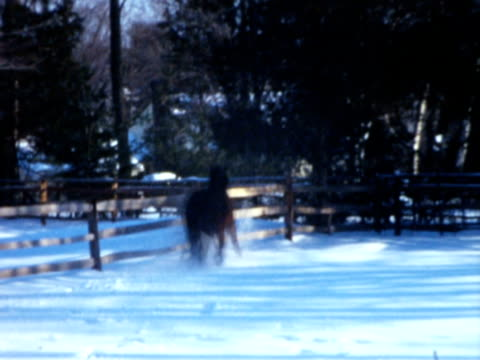 1960s montage horse running back and forth along fence line during winter / connecticut, usa - ranch stock-videos und b-roll-filmmaterial