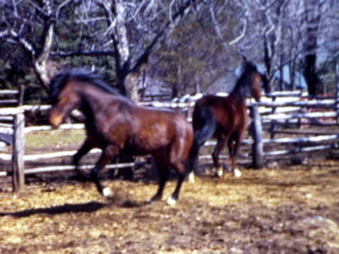 1960s montage horses running back and forth in pen / connecticut, usa - bocksprång bildbanksvideor och videomaterial från bakom kulisserna