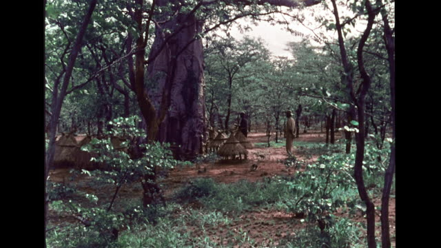 SOUTHERN AFRICA HD WS Two Tonga men standing in forest near baobab tree man speaking native language Indigenous people Zambia Zimbabwe Rhodesia...