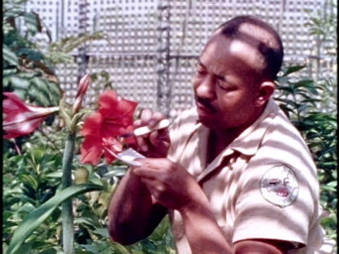 1970s montage botanists with flowers / los angeles, california - botanik stock-videos und b-roll-filmmaterial