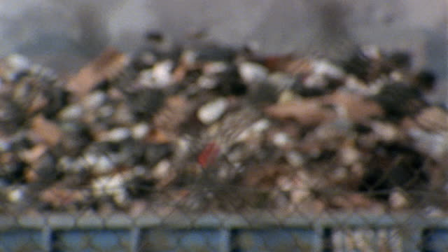 1980s close up rack focus fence outside dump / medium shot pan piles of garbage / new york city - garbage stock videos & royalty-free footage