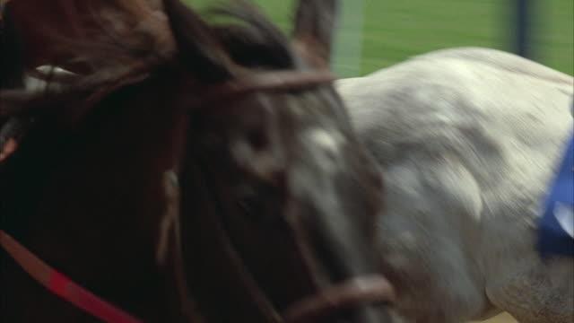 stockvideo's en b-roll-footage met 1980s cu pov horse race - kleine groep dieren