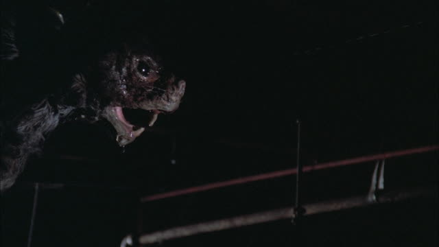 stockvideo's en b-roll-footage met 1980s cu rat monster in rafters of basement - rat