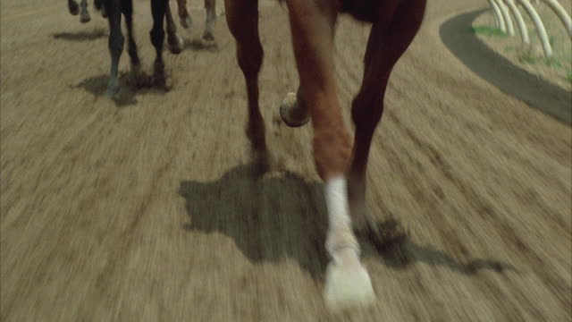 1980s rear pov ms horse race - low section stock videos & royalty-free footage