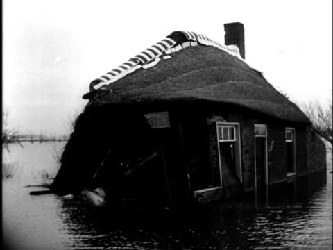 1Feb1953 B/W MONTAGE Damage during the flooding disaster in 1953 dead animals and livestock / Zeeland Netherlands