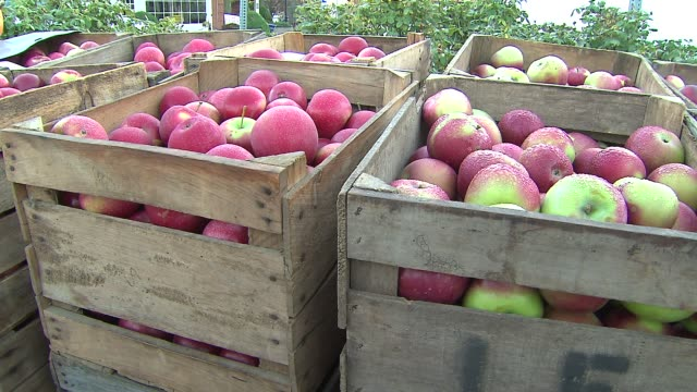 21st annual apple fest in long grove red delicious apples in crate on september 27 2013 in long grove illinois - red delicious stock videos & royalty-free footage