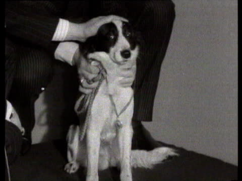 26mar1966 b/w ms medal awarded to pickles the dog after recovery of world cup / united kingdom - 1966 stock-videos und b-roll-filmmaterial