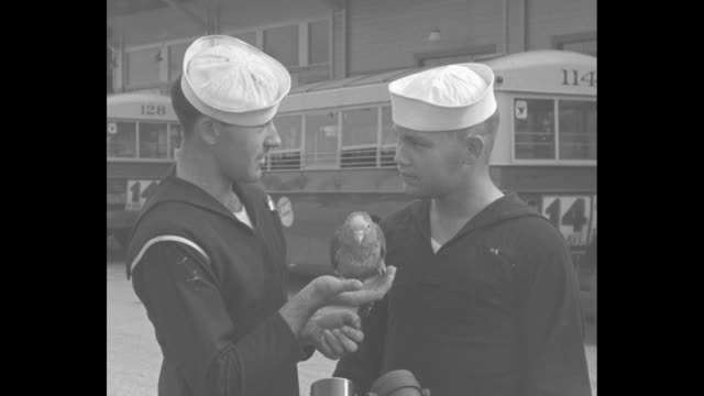 vídeos de stock, filmes e b-roll de 2shot woman with us navy sailor beau in long beach ca harbor after his arrival home his hat reads uss oklahoma sots both comment on his being back... - marinheiro