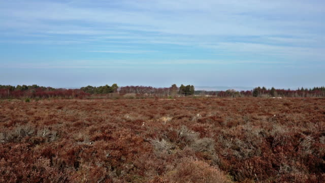 360-degree view of drumossie moor, inverness site of the battle of culloden - bog stock videos & royalty-free footage