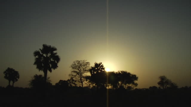 3rd march 2009 ws trees backlit by sun at sunset / duk payuel jonglei sudan - copse stock videos and b-roll footage
