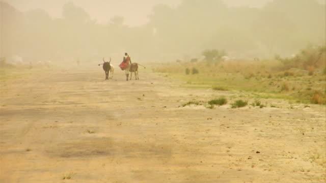 3rd march 2009 woman herding bulls down dirt road / duk payuel, jonglei, sudan - dust storm stock videos & royalty-free footage