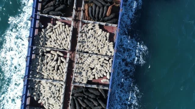 4k aerial of ferry at sea, carrying sheep and cattle - cattle stock videos & royalty-free footage