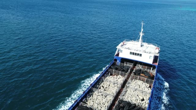 vidéos et rushes de 4k aerial of ferry at sea, carrying sheep and cattle - cattle