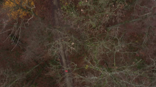 4k aerial video following jogging woman above trees in autumn - herbst stock-videos und b-roll-filmmaterial