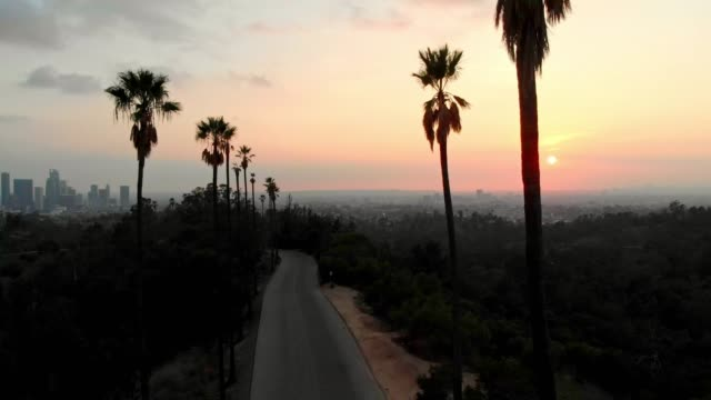 4k aerial video - palm trees in the sunset la - los angeles stock videos & royalty-free footage