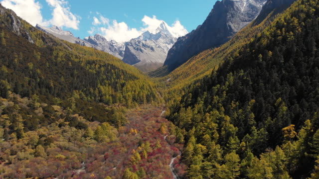 4k aerial view and dolly forward of valley in autumn season at yading nature reserve, china. - snowcapped mountain stock videos and b-roll footage