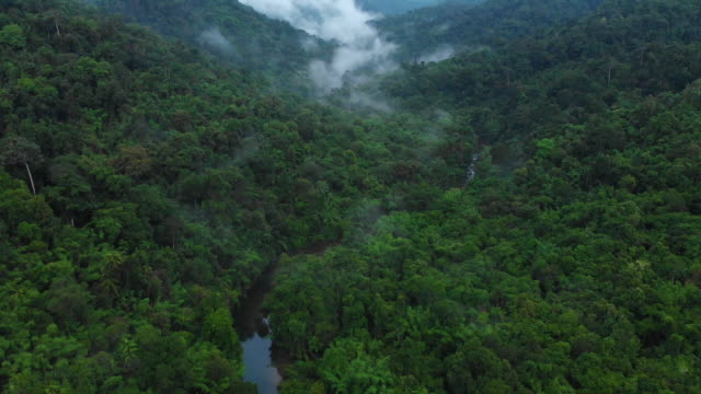 4k aerial view and tilt up of misty tropical rainforest at Khao sok national park.