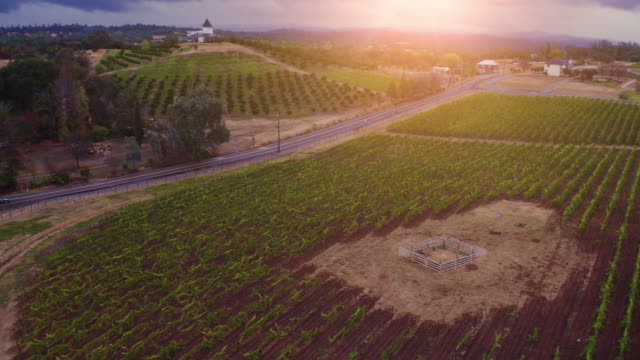 4k aerial wine country farmland vineyard stock footage - vineyard stock videos & royalty-free footage