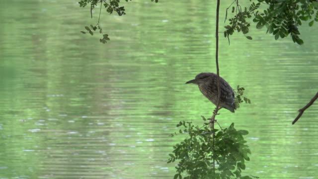 4k: tiervogel im zoo - tier in gefangenschaft stock-videos und b-roll-filmmaterial