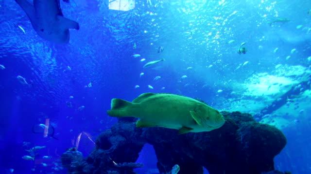 4 k aquarium unter wasser zoo - tier in gefangenschaft stock-videos und b-roll-filmmaterial