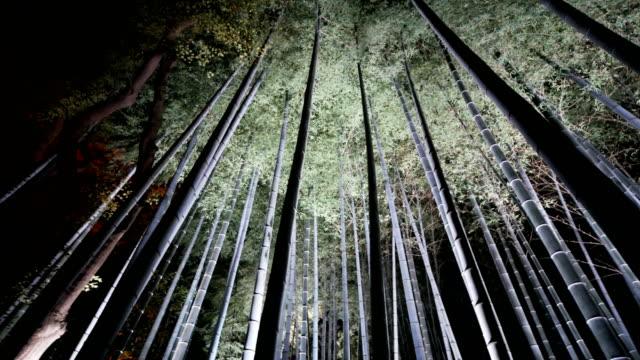 夜、京都に 4 k 竹グローブ フォレスト - 潅木点の映像素材/bロール