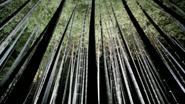 4k Bamboo grove forest at night, Kyoto Japan