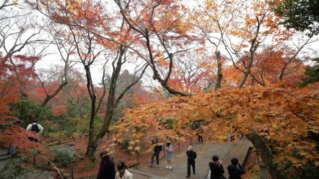 4k beautiful autumn colors in japan - maple leaf stock videos and b-roll footage