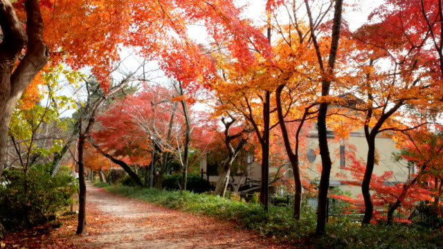 4k beautiful autumn colors in japan - autumn leaf color stock videos and b-roll footage