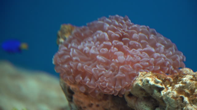 4k Beautiful of fish and coral undersea.