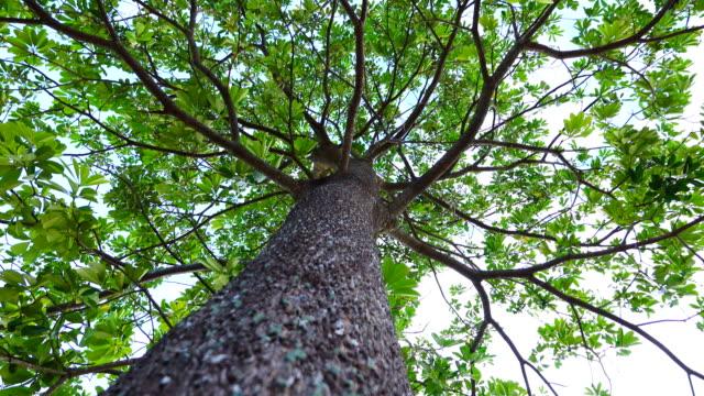 4 k: 風の風の下のブランチの大きな木 - 大きい点の映像素材/bロール