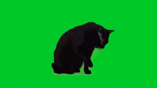 4k black cat licking on green screen - one animal stock videos & royalty-free footage
